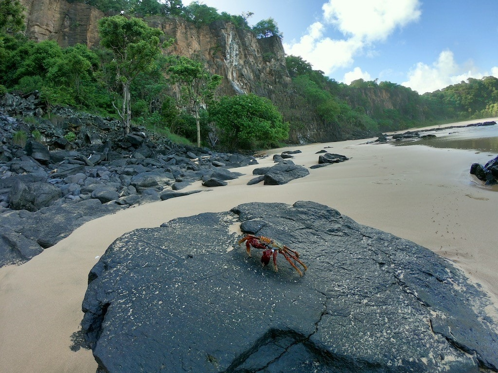 isola brasile fernando de noronha