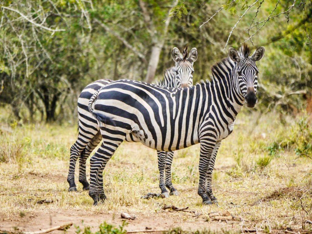 lake mburo uganda camping safari