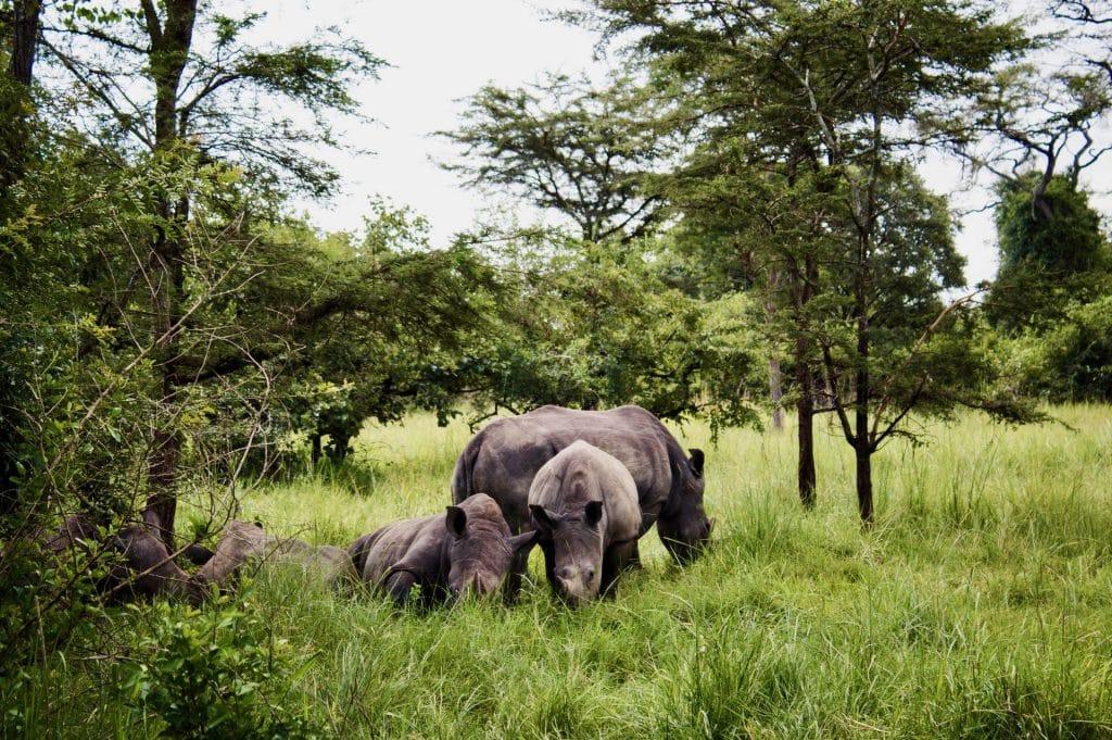 rinoceronti safari uganda