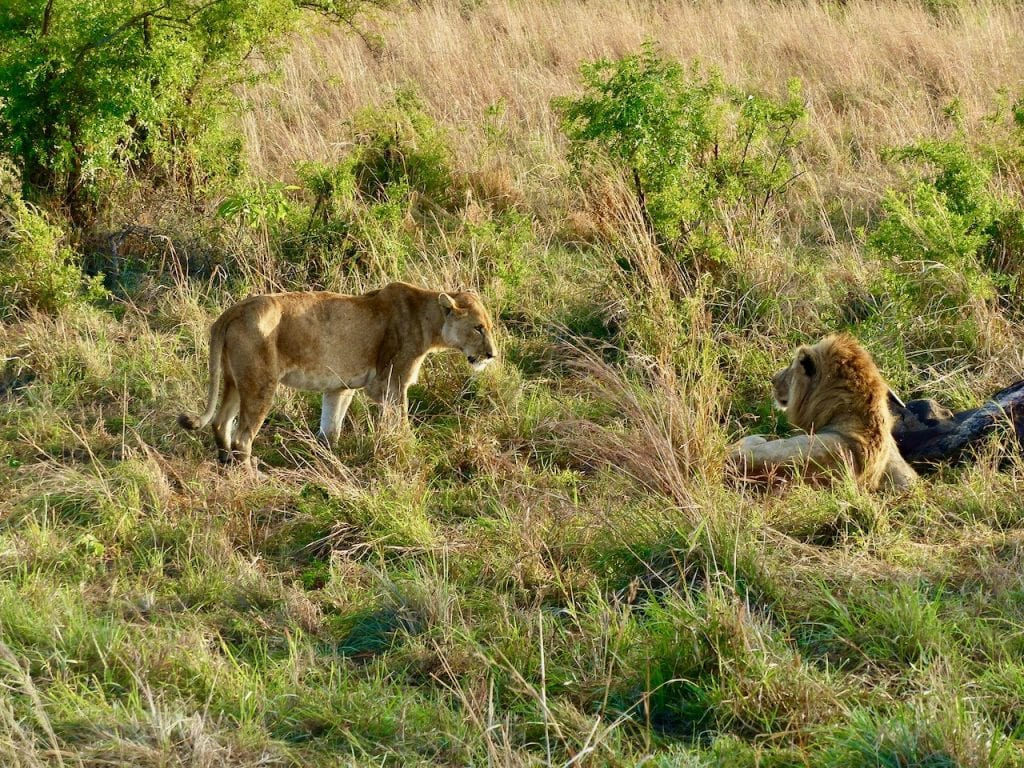 leoni kidepo park uganda