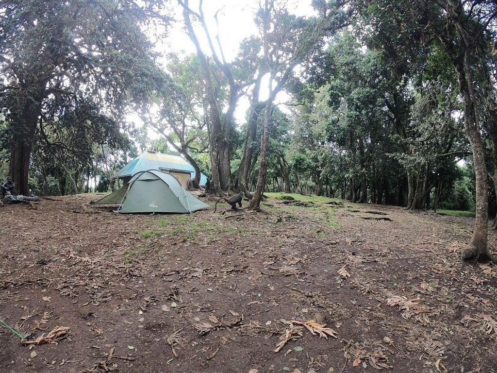 big tree camp kilimangiaro