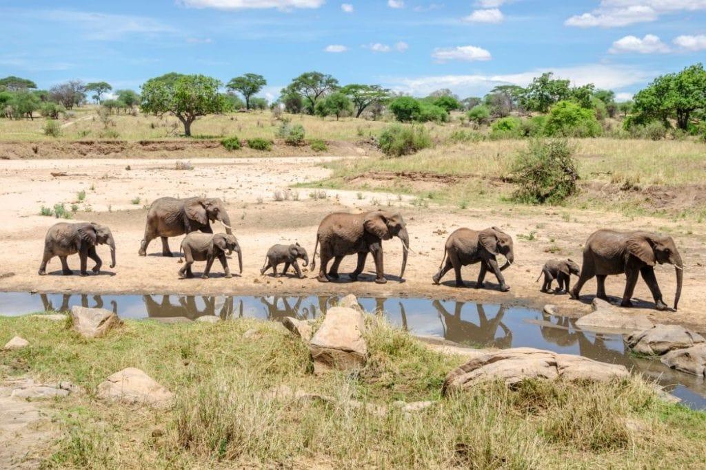 elefanti tarangire national park tanzania