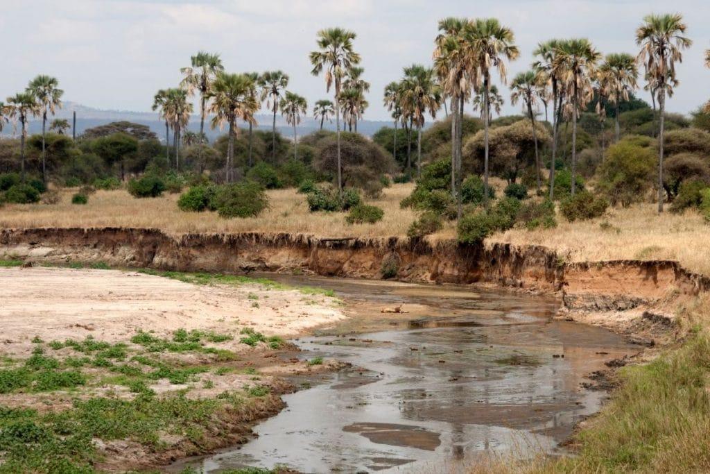 fiume tarangire
