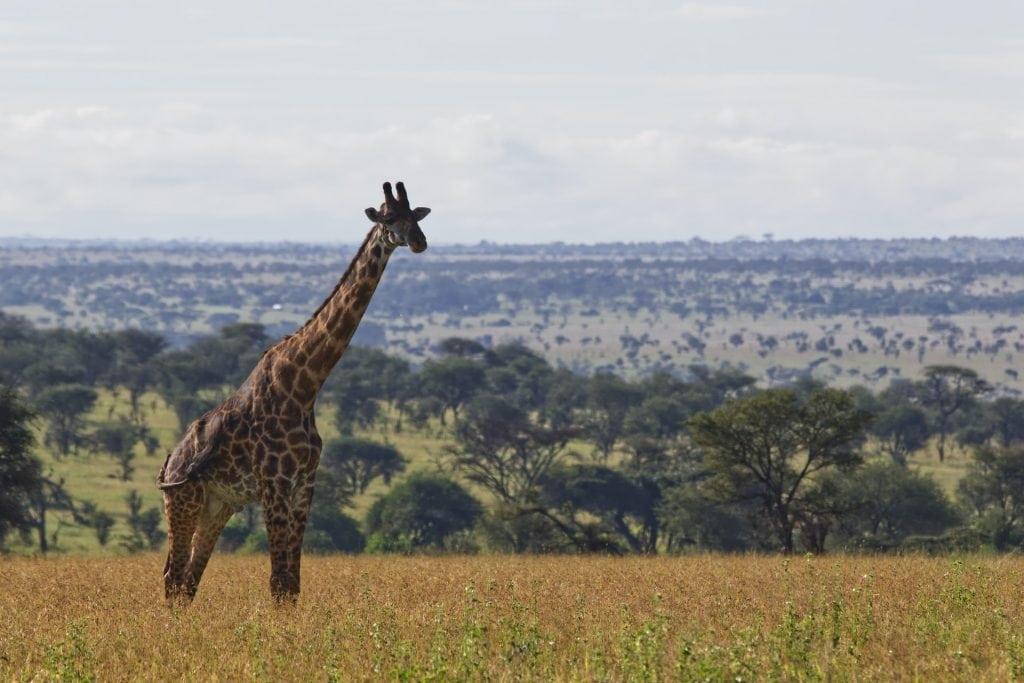 parco nazionale serengeti tanzania
