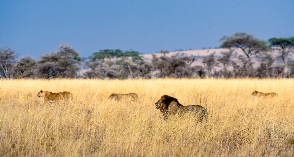 tanzania serengeti quando andare