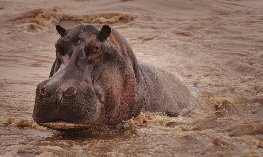 parco nazionale del serengeti tanzania