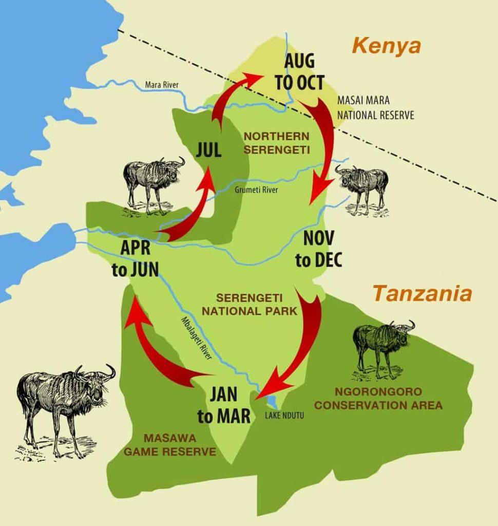 migrazione gnu serengeti
