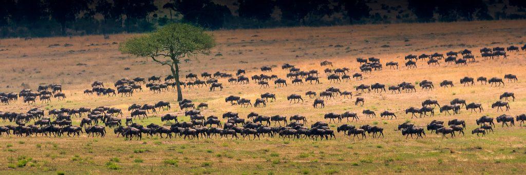 africa serengeti migrazione