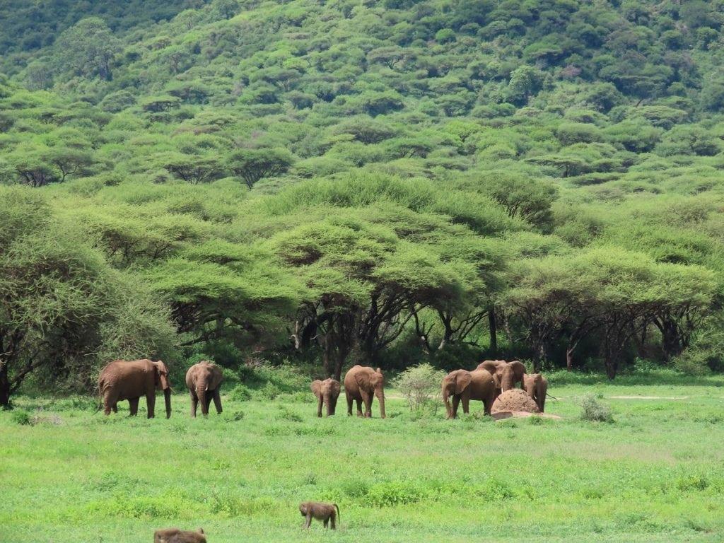 riserva di ngorongoro safari elefanti