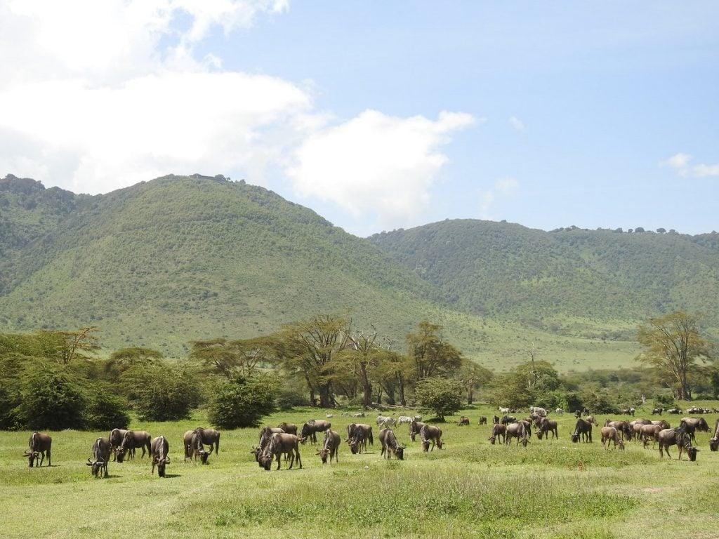safari ngorongoro national park tanzania
