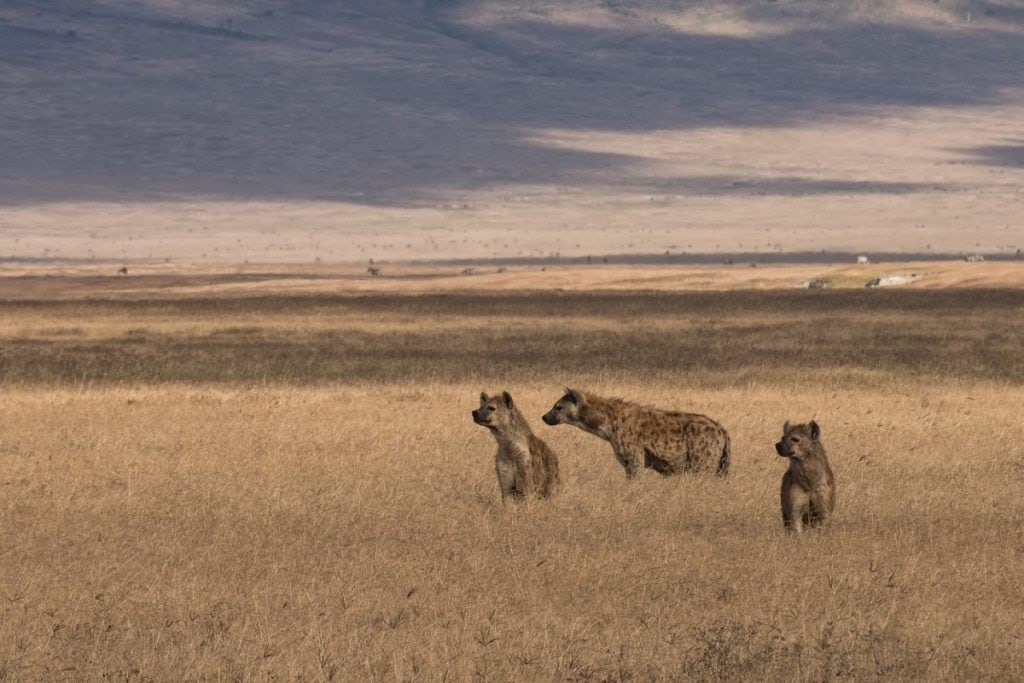 safari ngorongoro tanzania