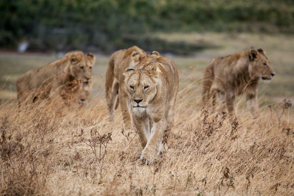 safari riserva naturale ngorongoro