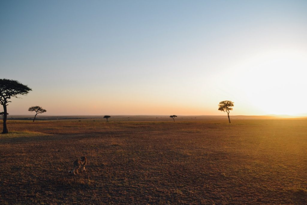 parco del serengeti turismo