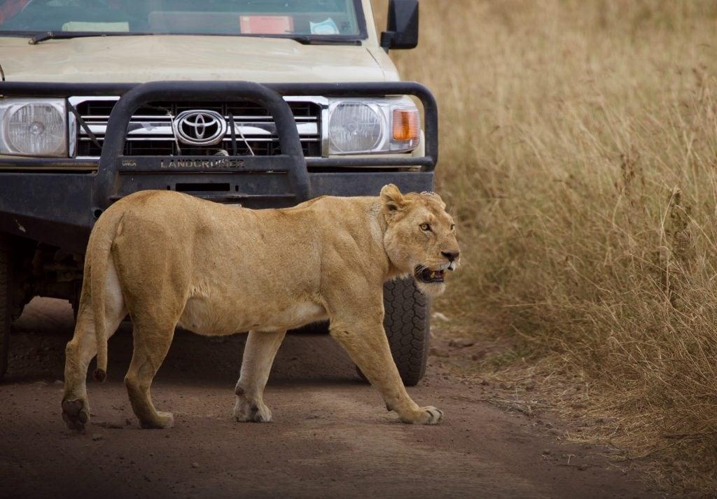 serengeti tour