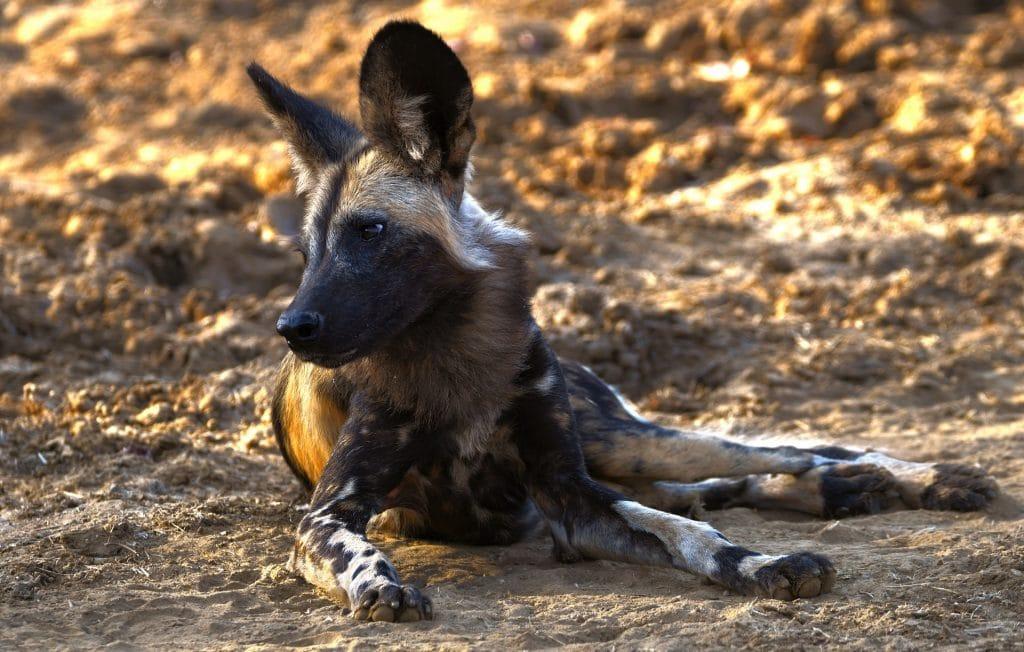 safari nel lower zambezi national park