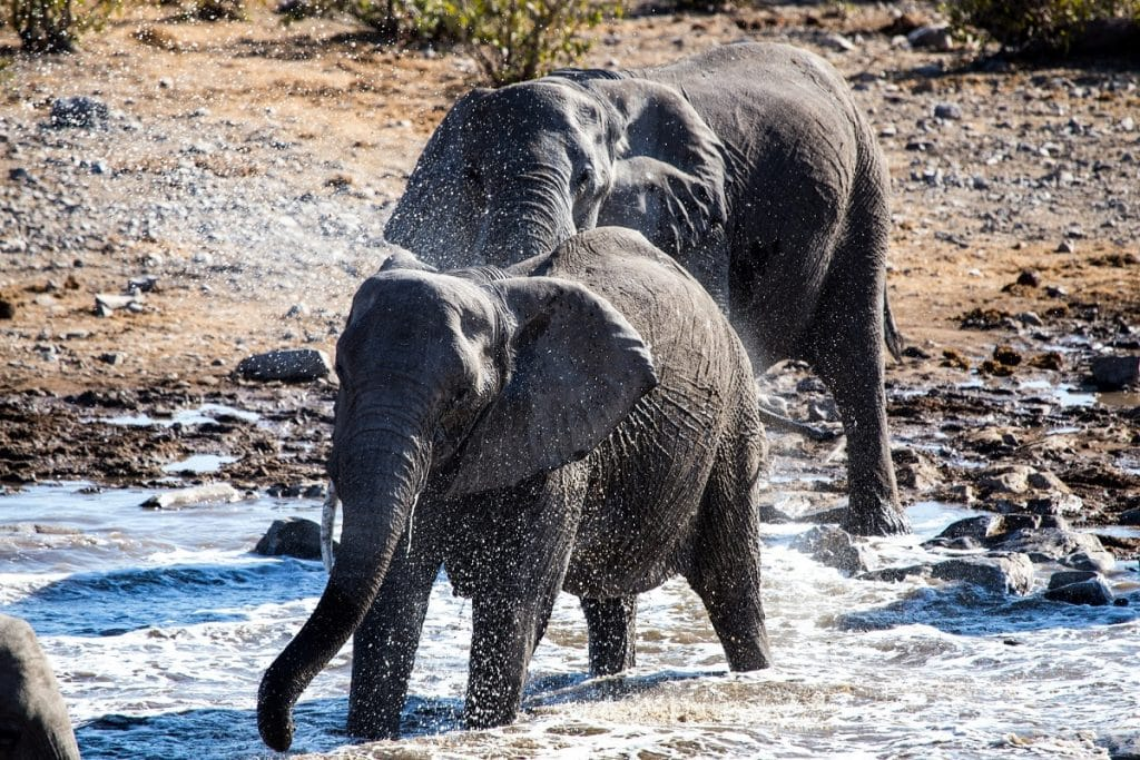 safari migliori etosha national park elefanti