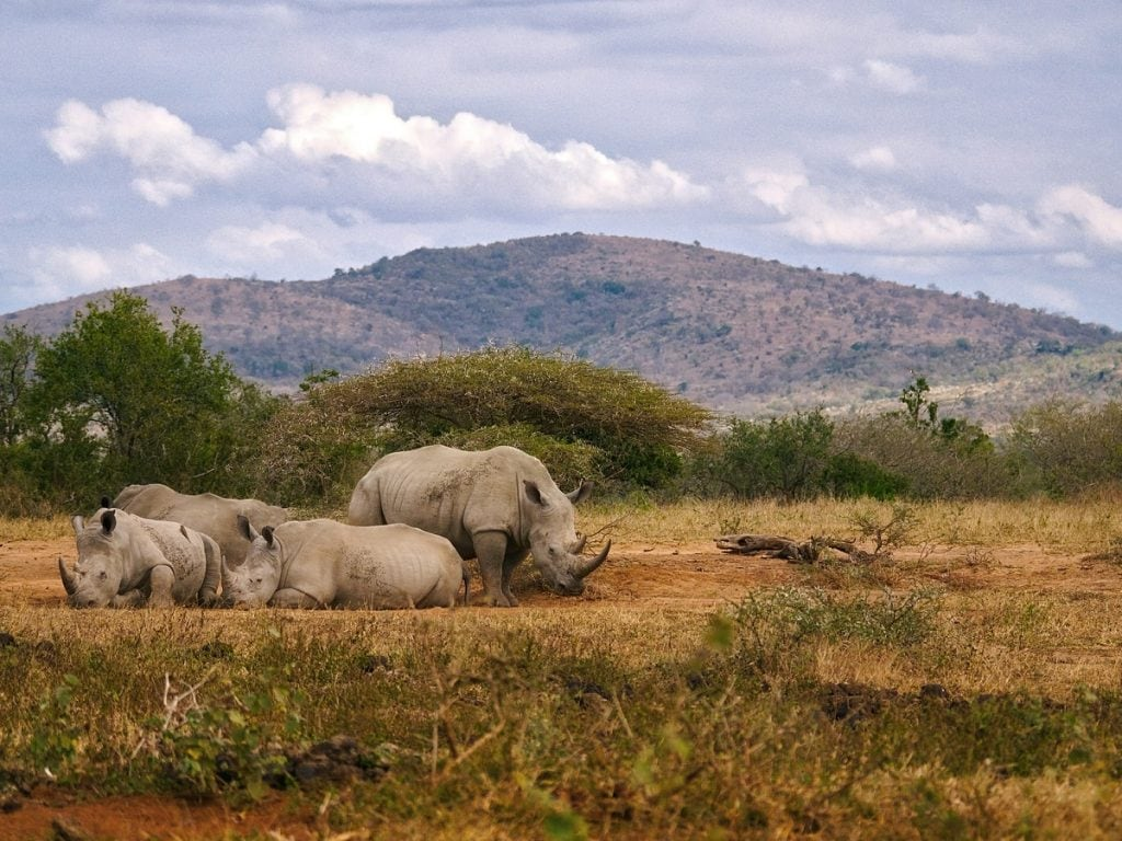 rinoceronto bianco safari imfolozi
