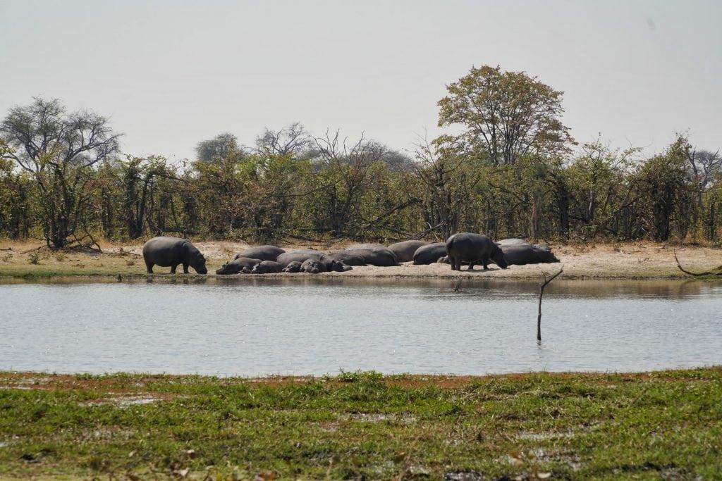 safari delta okavango
