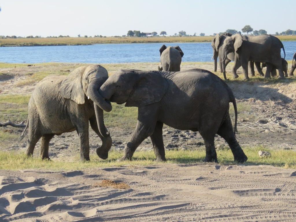 chobe tra i safari più belli africa