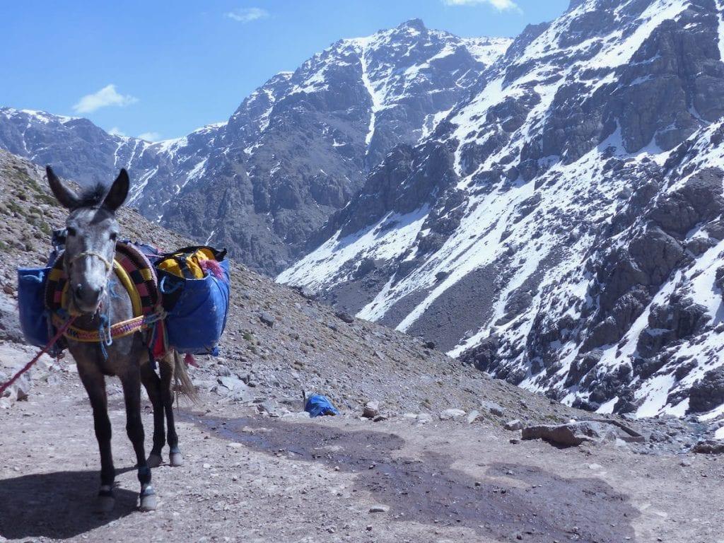 mulo trekking atlante marocco
