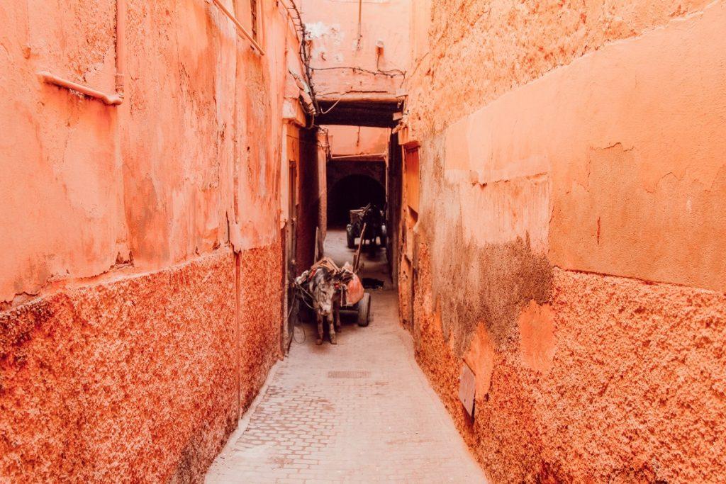 medina marrakech cosa vedere